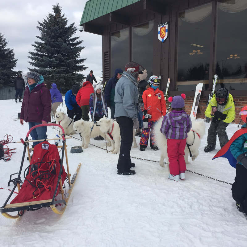 Picture of sled dogs, white huskies, and people enjoying the day at Pine Knob, celebrating SnowFest.